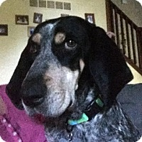 Adopt A Pet :: Lexi - Atlanta, GA