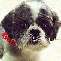 Adopt A Pet :: Ling - Newington, VA