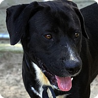 Adopt A Pet :: Carter - Oxford, NC
