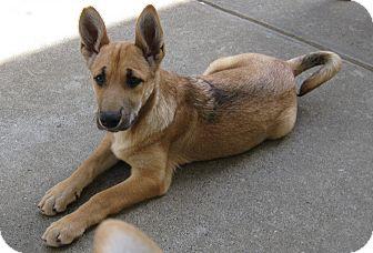 Carolina Dog Mix Dog for adoption in Concord, California - Raleigh