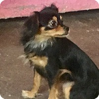 Adopt A Pet :: Karona - Henderson, KY