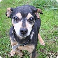 Adopt A Pet :: Clyde - Portland, OR