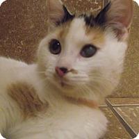 Adopt A Pet :: Skittles - Appleton, WI
