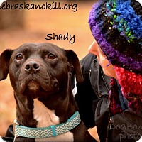 Adopt A Pet :: Shady - Lincoln, NE