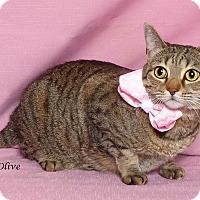 Adopt A Pet :: Olive - Kerrville, TX