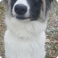 Adopt A Pet :: Libby - Oakland, MI