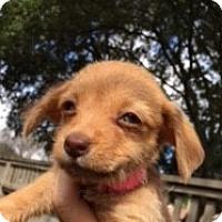 Adopt A Pet :: Fauna - Pearland, TX