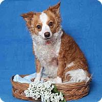 Adopt A Pet :: Osita - Lomita, CA