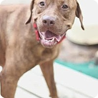 Adopt A Pet :: Scarlett - Kingwood, TX