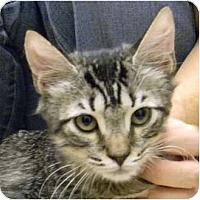 Adopt A Pet :: Charlotte - Bonita Springs, FL