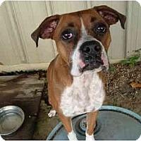 Adopt A Pet :: Kasey - Julian, NC