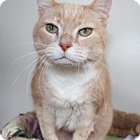 Adopt A Pet :: Missy Teatime - Red Deer, AB