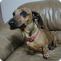 Adopt A Pet :: Lola - Meridian, ID