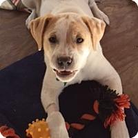 Adopt A Pet :: Mork - Edisto Island, SC