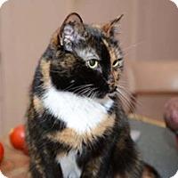 Adopt A Pet :: Scarlett - Merrifield, VA