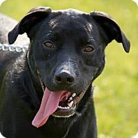 Adopt A Pet :: Duncan - Schererville, IN