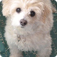 Adopt A Pet :: Hope-ADOPTION PENDING - Boulder, CO