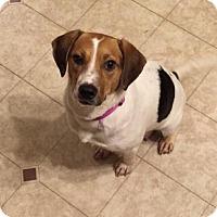 Adopt A Pet :: Mae - Round Lake Beach, IL