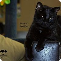 Adopt A Pet :: Squints - Baton Rouge, LA