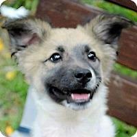 Adopt A Pet :: Dolly - San Francisco, CA
