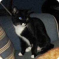 Adopt A Pet :: Trixie - N. Billerica, MA
