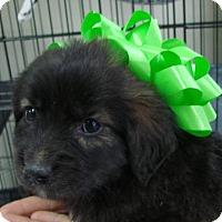 Adopt A Pet :: Shrek - Erwin, TN
