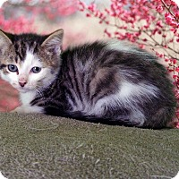 Adopt A Pet :: Nick Wilde - New Castle, PA