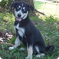 Adopt A Pet :: Morri - Bedminster, NJ