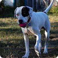 Adopt A Pet :: Hoku - McKinleyville, CA