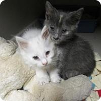 Adopt A Pet :: Babies - Colonial Beach, VA