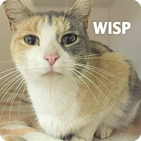 Adopt A Pet :: Wisp-so pretty! - Lapeer, MI