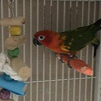 Adopt A Pet :: Mooch - Punta Gorda, FL