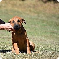 Adopt A Pet :: Jean Louise - Groton, MA