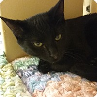Adopt A Pet :: Jackson Avery (in CT) - Manchester, CT