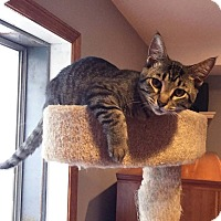 Adopt A Pet :: Posey - Lombard, IL