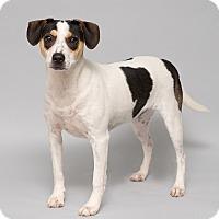 Adopt A Pet :: Jay - Westfield, NY