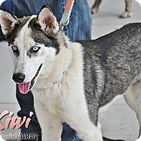 Adopt A Pet :: Kiwi--Coming soon! - Carrollton, TX