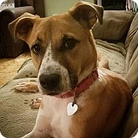 Adopt A Pet :: Heidi - Newcastle, OK