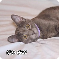 Adopt A Pet :: Gracen - Hot Springs Village, AR