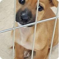 Adopt A Pet :: Elena/Adoption PENDING - Hillside, IL