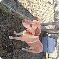 Adopt A Pet :: Jozee - Valley Falls, KS