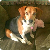 Adopt A Pet :: Ryder - great family dog! - Whitehouse Station, NJ
