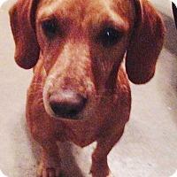 Adopt A Pet :: Red - E. Greenwhich, RI
