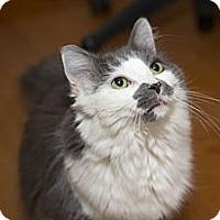 Adopt A Pet :: Margo - Chicago, IL