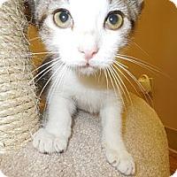 Adopt A Pet :: Nick - Medina, OH
