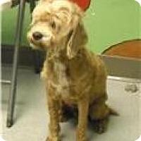 Adopt A Pet :: Jasmine -  Gentle & Sweet! - Quentin, PA