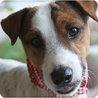 Adopt A Pet :: SKIP - san diego, CA