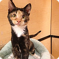 Adopt A Pet :: Mariah - Foothill Ranch, CA
