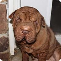 Adopt A Pet :: Garnet - Newport, VT