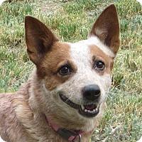 Adopt A Pet :: ELLIE - Nampa, ID